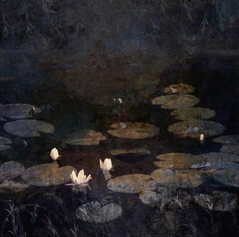 Bilde av Water Lilies av Maria Natalie Skjeset