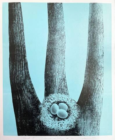 Bilde av Drømmer om vinger III (turkis) av Trine Lindheim